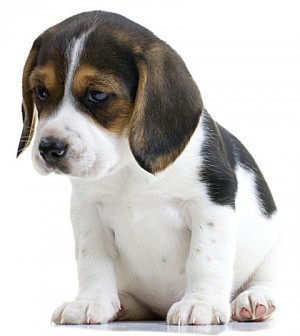 puppy-separation-anxiety+