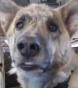 Dog Speaks