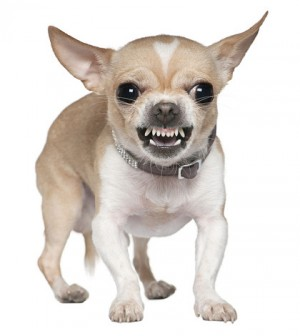 aggressive dog behavior