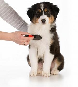 basics of dog grooming
