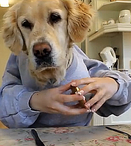 Golden Retriever With Hands