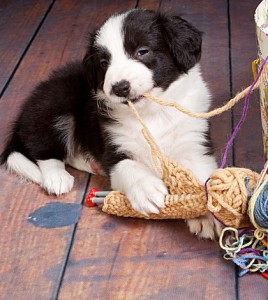 dogs and renting a place