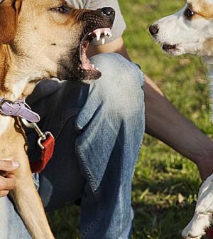 dominant dog