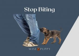Stop Your Puppy From Biting You!
