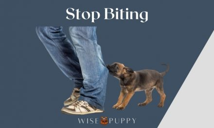 Stop Your Puppy From Biting