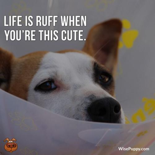 Dog_Quote_088