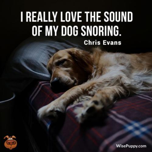 Dog_Quote_128