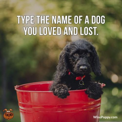 Dog_Quote_129