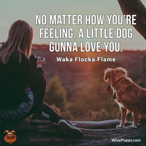 Dog_Quote_222