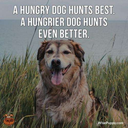 Dog_Quote_228