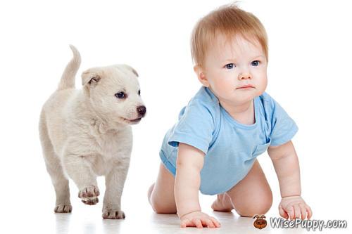 wisepuppy-puppies-12
